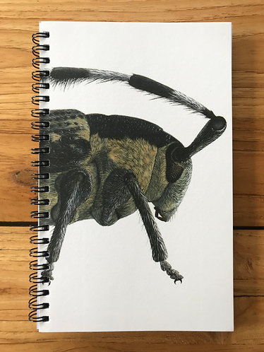 Beetle Lined Notebook