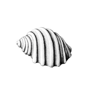 Cart-rut Shell III