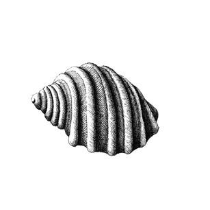 Cart-rut Shell II