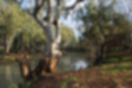 Accommodation caravan park camping Moulamein lake lakeside cabin site powered Moulamein hire rent rental moulameinlakesidecaravanpark trailer housing grassed bbq heater fire ozpig accessories wood heat edward river fishing boating