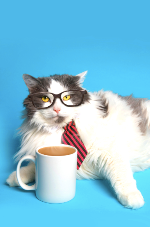 A cat with a mug of coffee for energy