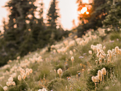 Mt. Ranier-57.jpg