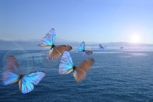 Butterflies in the swarm over a lake.jpg