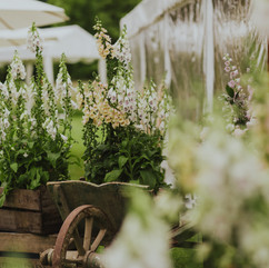 Styling with cottage garden plants