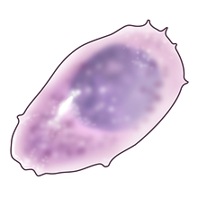 plamsa cell.png