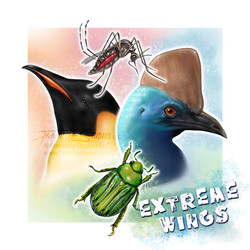 Extreme Wings!