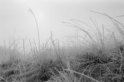 Zúzmarás rét a ködben