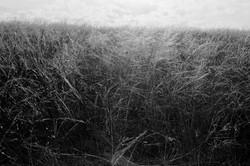 Nyárvégi füves rét
