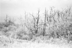 Téli köd II.