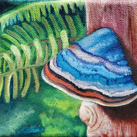 Fungal Conk