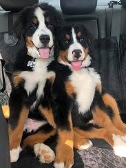 4 months car ride (2).jpg