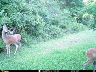 Food Plots To Starve Deer