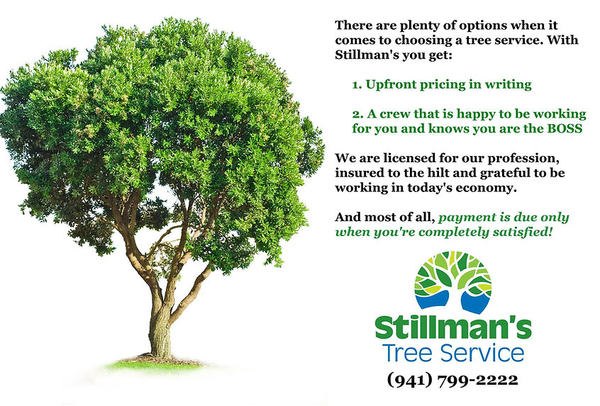 stillmans treeservice of bradenton and sarasota