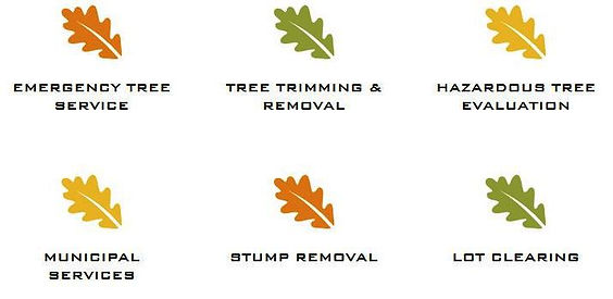 tree services from stillmans bradenton s