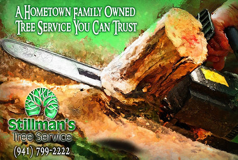 stillmans tree services bradenton and sarasota