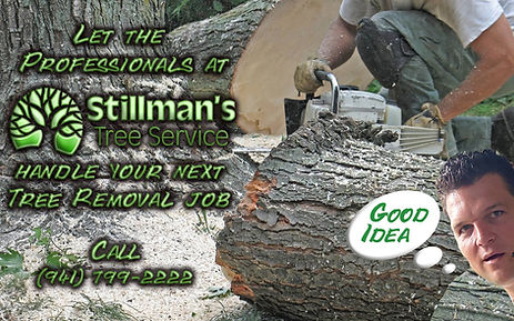 tree services in bradenton and sarasota by stillmans tree services