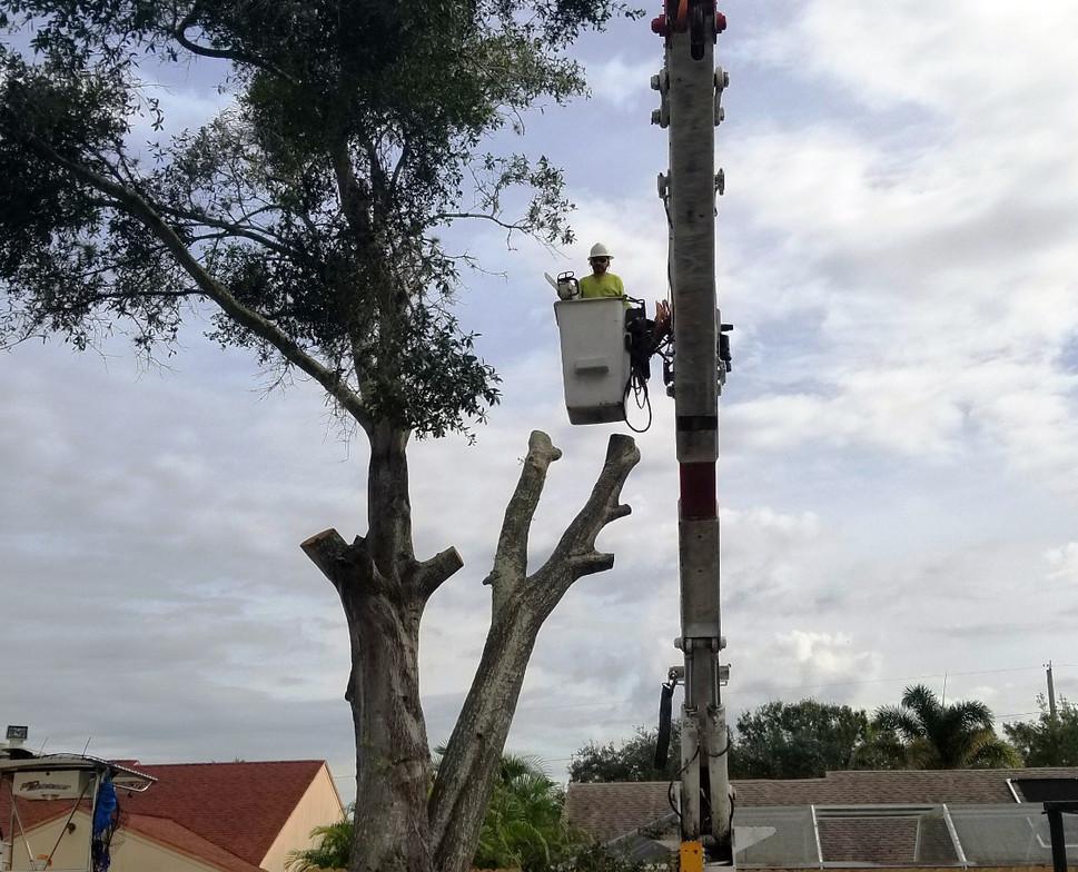 sarasota tree cutting services stillmans
