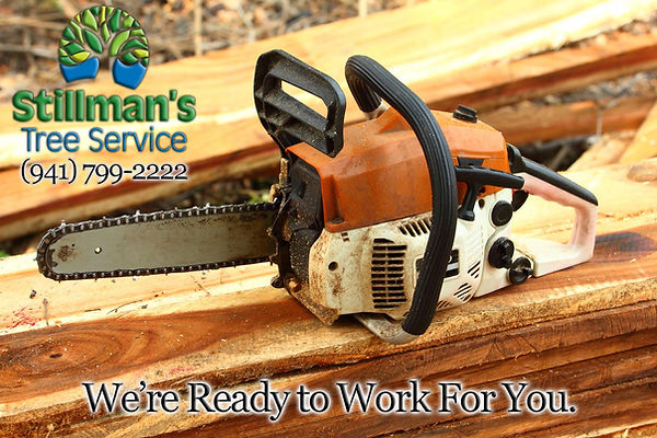 tree cuttingby stillmans tre services of bradenton and sarasota