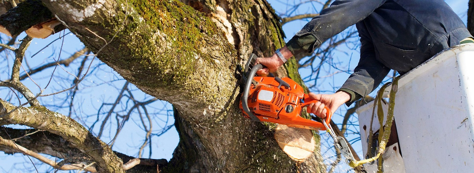 tree cutting services bradenton sarasota