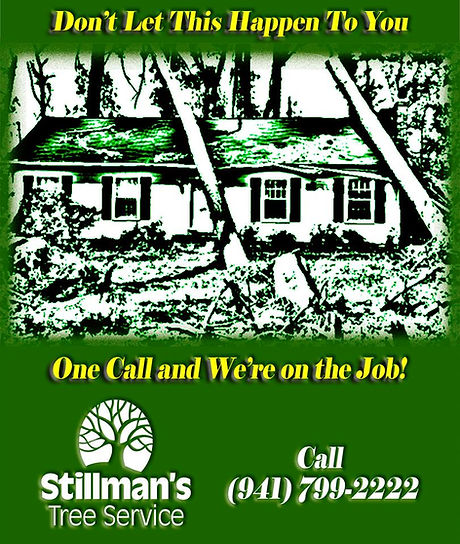 tree services by stillmans tree services in bradenton and sarasota