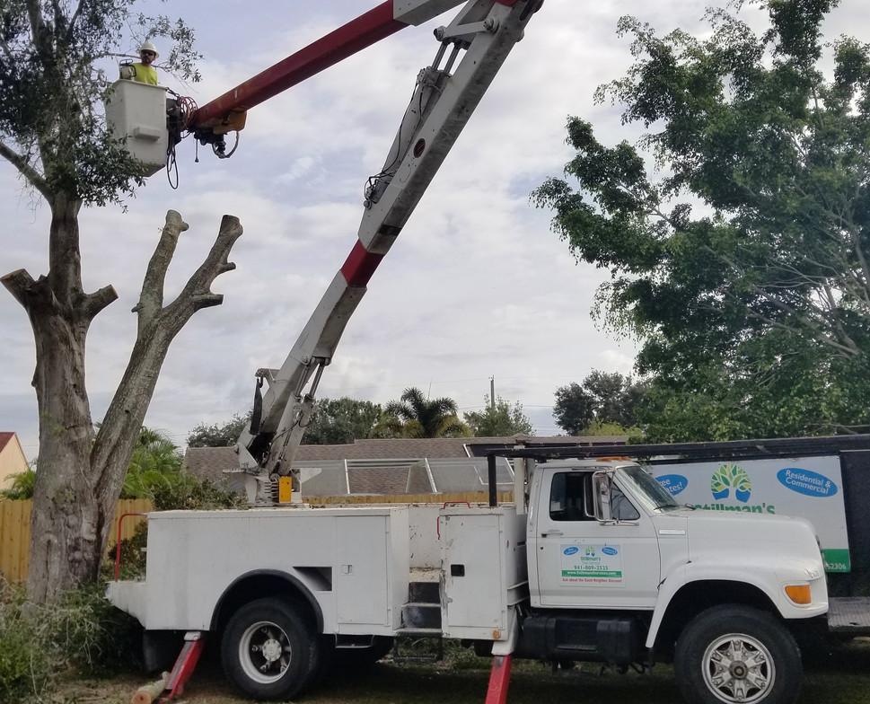 sarasota tree service stillmans.jpg