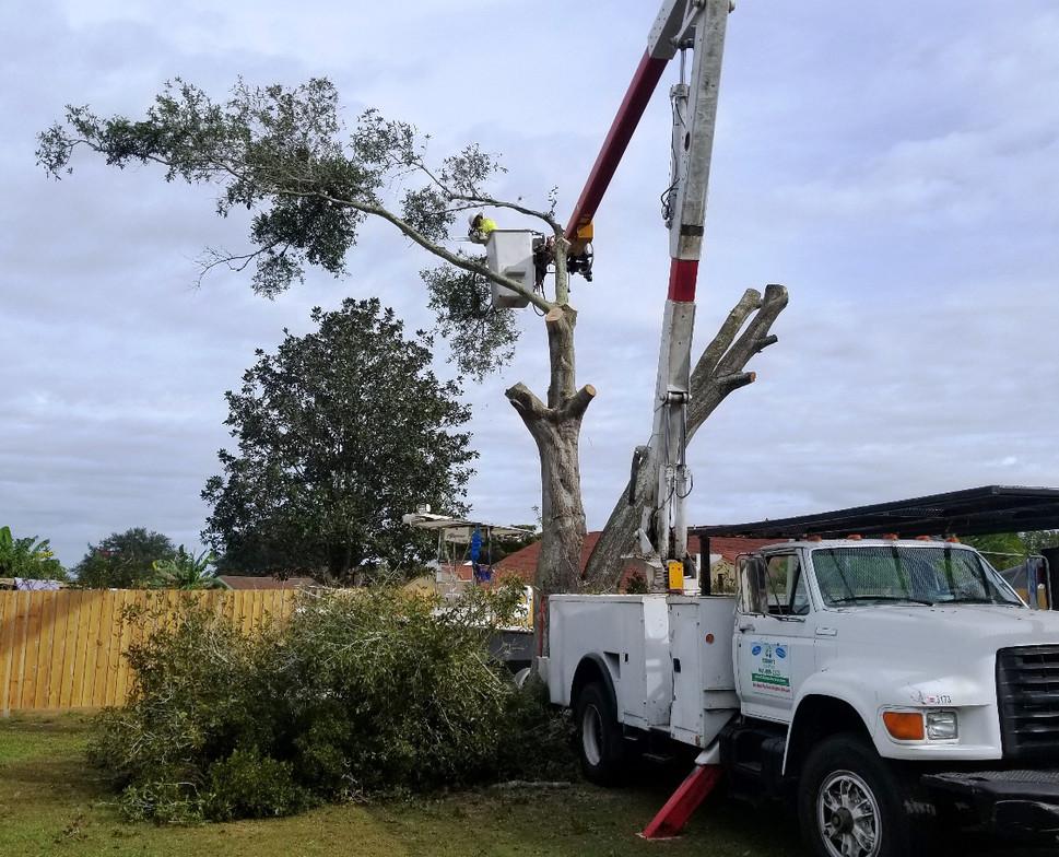 sarasota tree services stilmans_edited.j