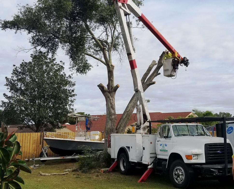 sarasota tree trimming services stillman