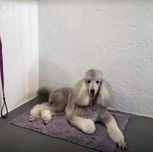 dog grooming gulf gate sarasota.JPG