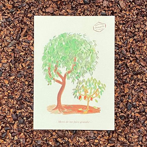 Carte Petit Cacaoyer