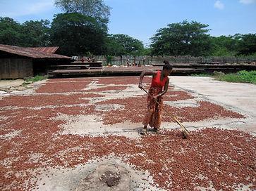 Encuentro Bean to bar France zone de séchage sous le soleil de Madagascar
