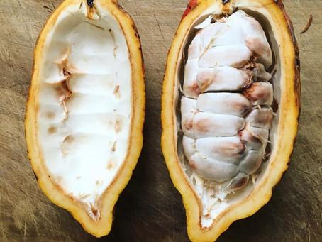 Île de la Réunion : Un cacao sauvage oublié