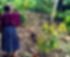 Encuentro Bean to bar france plantation guatemala