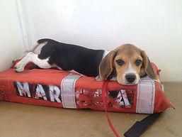 Captain the Beagle - Scuba Diving San Diego