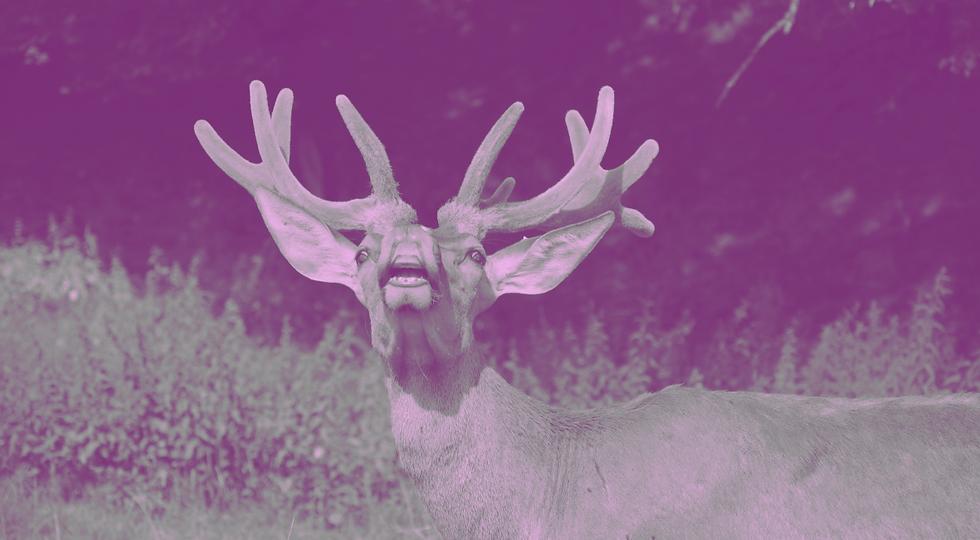 deerly_filter4.1©sirdeer.png