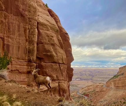 Colorado National Monument 3 - Photo Mar