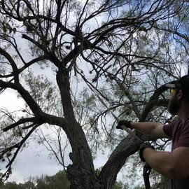 Quinn the tree man!