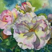 morning rose.jpg