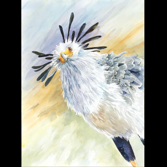 1`00-297 secretary bird.jpg