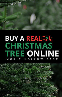 7327cd3cd7d Buy A Real Christmas Tree Online shop.jp