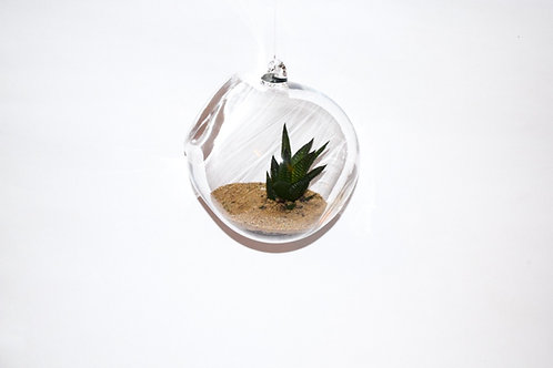 Hanging Clear Glass Terrariums small and large