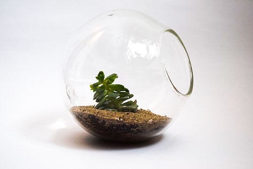 Table Top Glass Terrarium