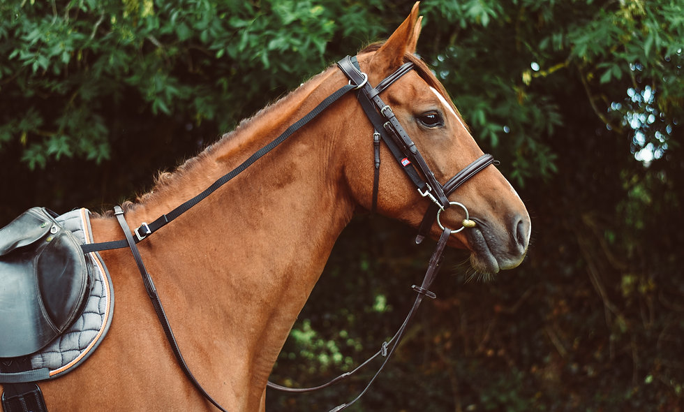 Equisential Anti Grazing Reins