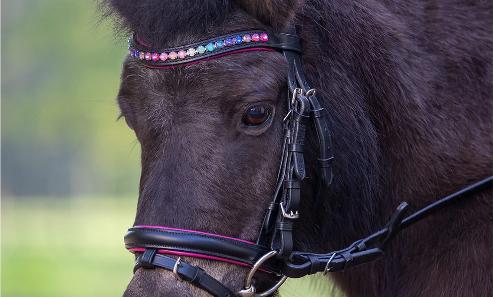 Star Bridle Pinky