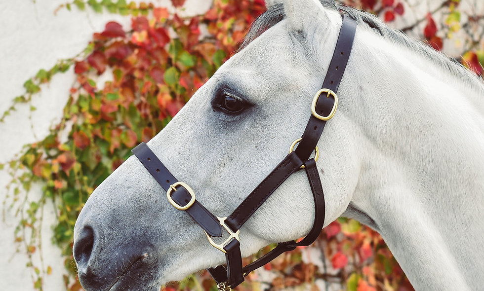 Equisential Leather Headcollar