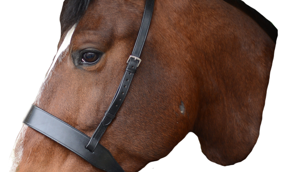 Mackey Classic Wide Flat Cavesson Nose Band