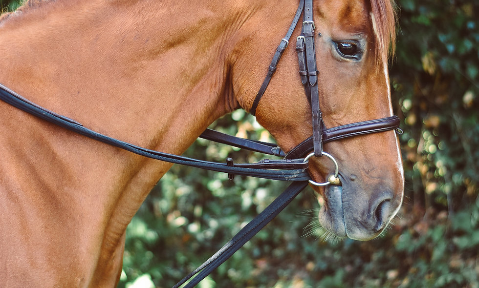 Equisential Padded Raw Reins