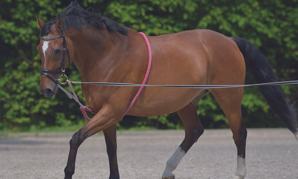 Lunging Aid
