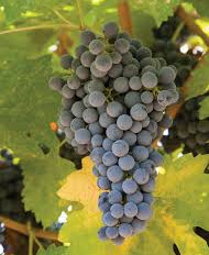 COVID-19 : Des aides apportées au secteur viticole