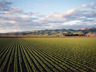 COVID-19 : les exploitants agricoles soutenus