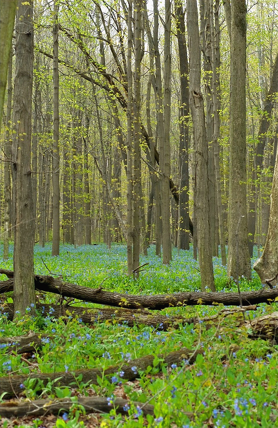 Spring Forest_edited.png